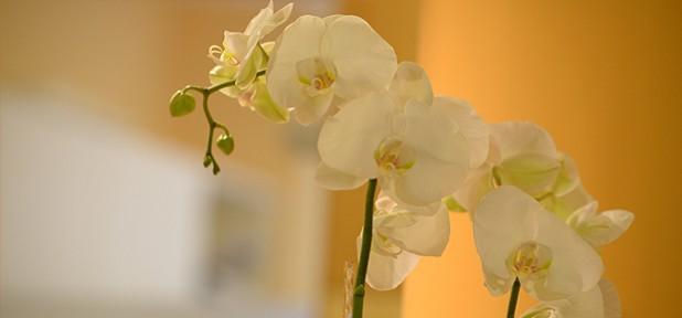 Blumen_03